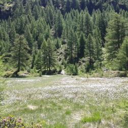 Alpe Campala