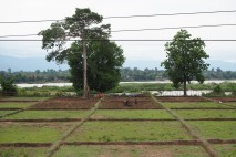 Working the rice paddy fields