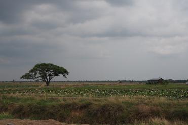 Landscape on Don Khong Island