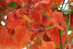 Colourful flowers - orange/red