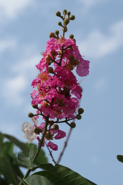 Colourful flowers - pink