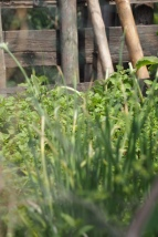 River garden - Village still life