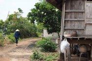 Village still life