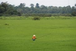 Balancing in the wetlands