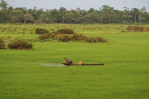 Stranded canoe in the wetlands