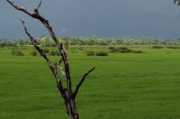 Wetlands - Ban Kiet Ngong