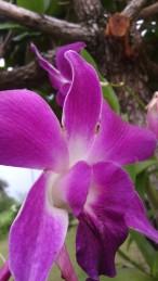 Flowers on Koh Mak 2