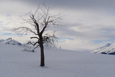 Tree Aeschi