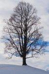 Tree Aeschiried