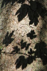 Tree shadow play